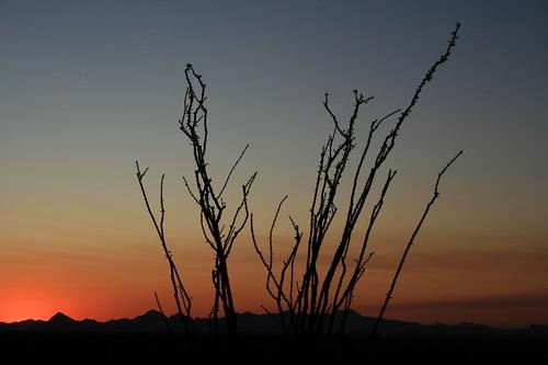 cactus_forest_20090927_053