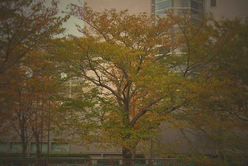 町田樹 画像41