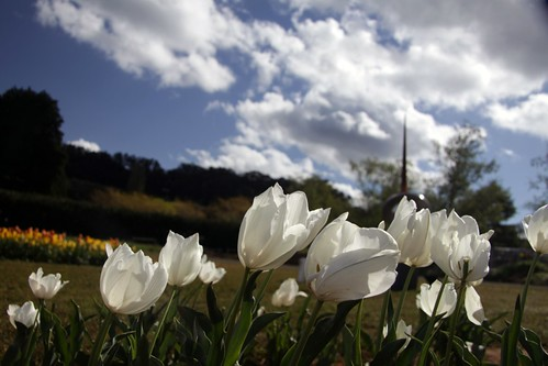 At the Tulip Festival, in the Dandenongs