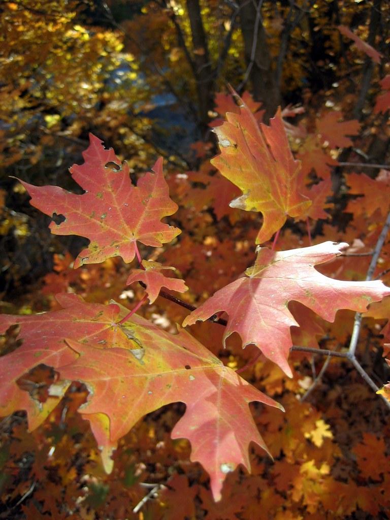 Fall Foliage 2009 003