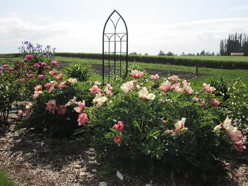 Adelman Peony Gardens - June 7, 2011