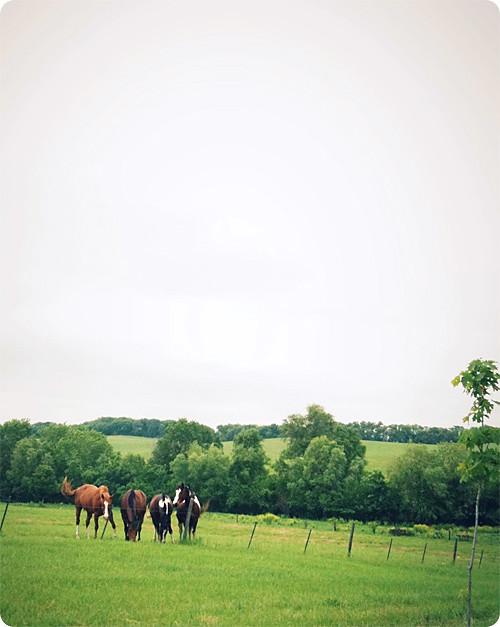 More horses.