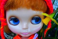 Look, Dagmar Gina, a winter daffodil!