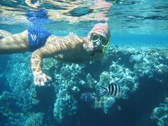 137_3721 (LarsVerket) Tags: egypt snorkling fisk undervannsfoto