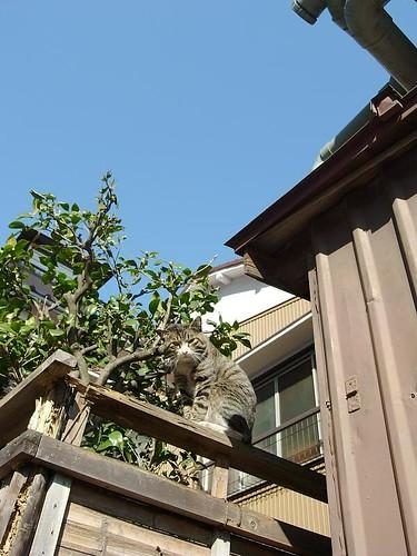 猫と青空と塀