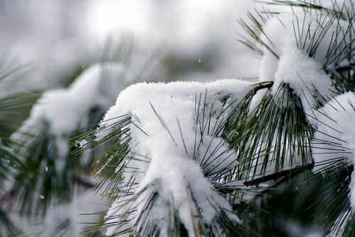 first snowfall of the season
