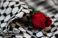 ..   (~ iS ) Tags: red flower rose december palestine honor victory 27th gazza