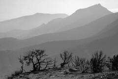 IMGP6922-bw6-1500 (clayhaus) Tags: scenicsnotjustlandscapes landscapelakemountainsaltutahtravelgreatnatureusaskysandwaterbreathtakingbeautifulwideviewamazingamericaseasaltygorgeousnaturalscenicfarawayoutdoorscloudydesertedcloudisolationopenisolatedfreedomcityuspanoramadesertstat landscapelakemountainsaltutahtravelgreatnatureusaskysa