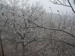 East Mountain (junebug_1944) Tags: icestorm eurekaspringsar january2009