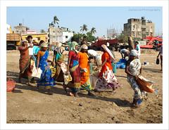 Versova Ladies (AdreWine) Tags: india bombay bom mumbai fishmarket versovabeach