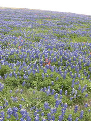 Surrounded by Bluebonnets