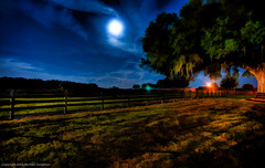 Looking elsewhere (MDSimages.com) Tags: world county city travel horses horse usa moon tree animals night digital america fence dark painting photography blog nikon media unitedstates florida farm painted south north central scenic marion east processing northamerica moonlight southeast processed equestrian hdr highdynamicrange d3 topaz ocala photopainting horsefarm travelphotography photomatix michaelsteighner mdsimages hyliteproductions ocali photomike07 mdsimagescom hylitecom