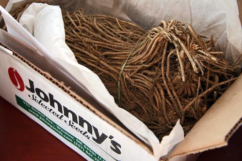asparagus shipment