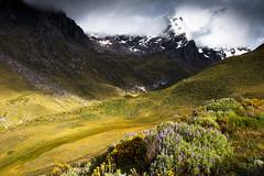 Huayhuash trek nature, flower, mountains etc.