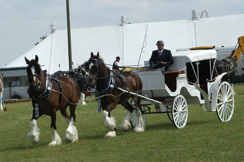 Heavy Horses with Carriage