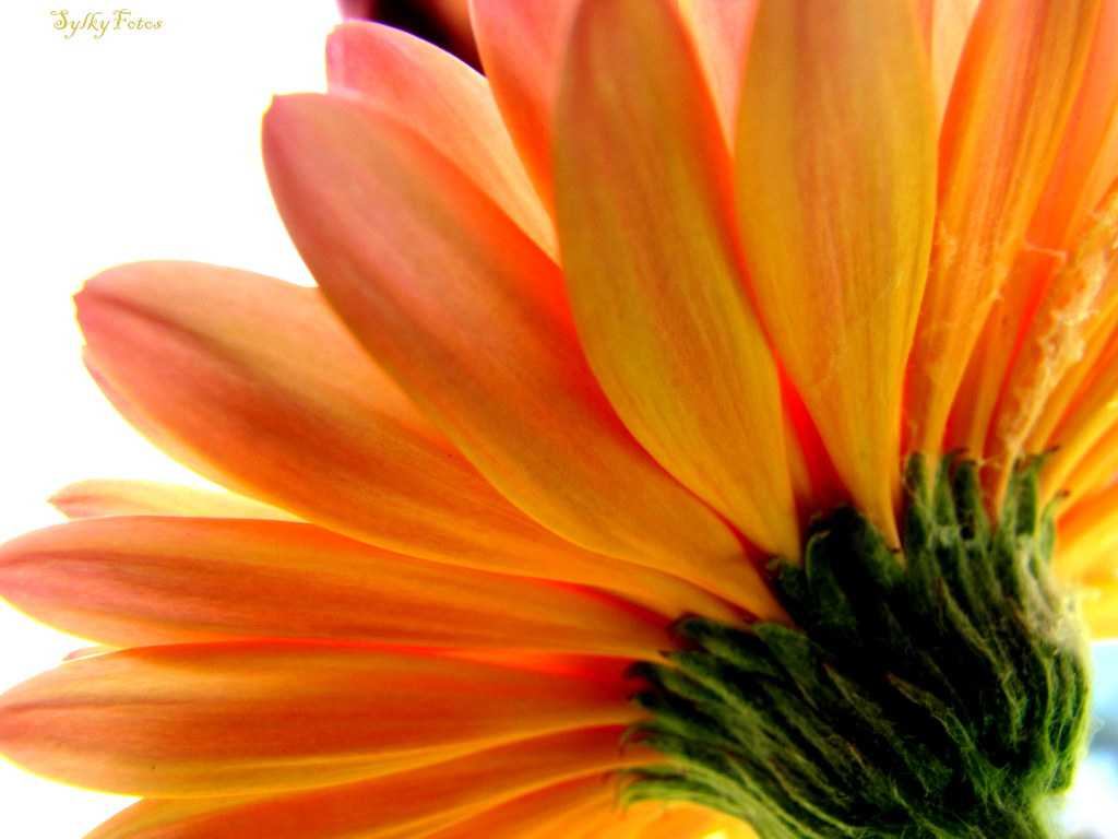 Don't forget to reach for what you want and be sure to be thankful when you get it :) Happy Flowery Friday!