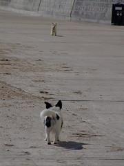 dog pet jr terrier jackrussell