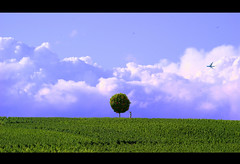 Eden (_David_Meister_) Tags: blue sky cloud tree green apple grass clouds photoshop plane landscape photography photo foto fotografie photographie gardenofeden lawn wiese himmel wolke wolken round apples eden grn blau flugzeug landschaft rund baum pfel abigfave overtheexcellence davidmeister apfen