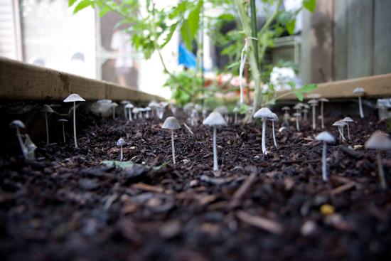 mushroom forest
