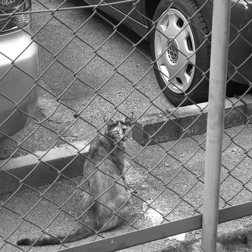 Today's Cat@20090813