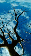 I'm a tree lover (Lvia Cristina) Tags: blue sky sunlight color tree azul clouds digital photography daylight day colorfull sony dia cu explore nophotoshop fotografia arvore nuvem cor galhos noleaves colorido h50 luzdosol coresfortes arvoreseca luzdodia iluminaonatural cmwd cmwdblue naturalilluminaton