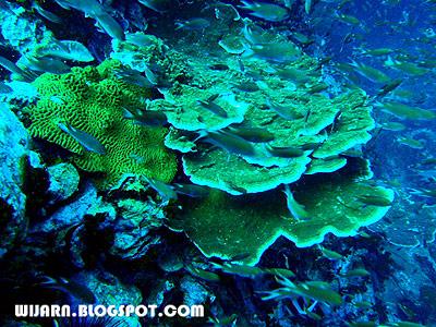 ปะการัง , กองหินชุมพร