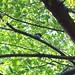 町田樹 画像55