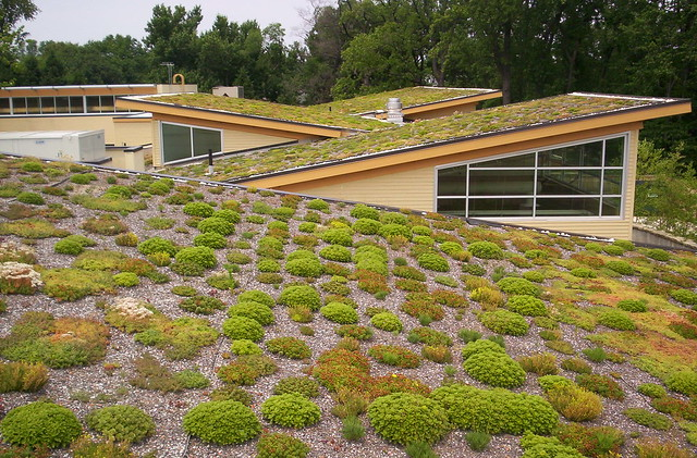 Green Roof at Walter Reed CC
