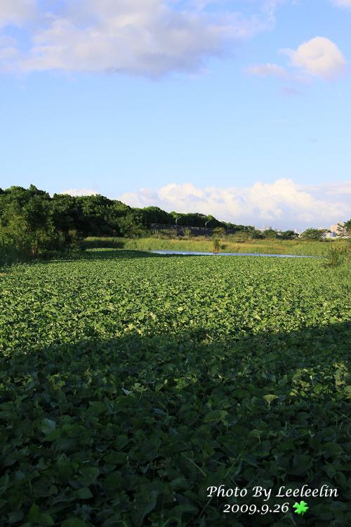 Tamron A09試拍測試|光華玉市|樹林鹿角溪溼地