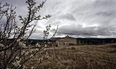 Olvidos de la primavera (Leandro MA) Tags: canoneos40d leandroma aguascndidas