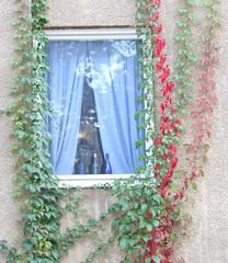 IMG_8300 Romantic window (HAKANU) Tags: autumn fall window colors colours bottles sweden stockholm curtain harvest autumncolours sverige sthlm gullmarsplan johanneshov blueribbonwinner grafikvägen