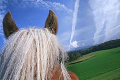 avelignese (silviacafarelli) Tags: blue sky horse color detail verde green up animal colore close earth south lawn piano ears particular primo blond cielo terra alto azzurro prato cavallo animale tyrol mane foreground sdtirol particolare adige dettaglio biondo criniera orecchie