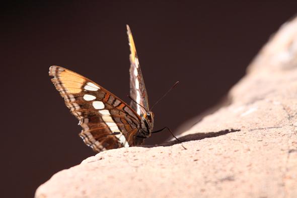 101609_butterfly
