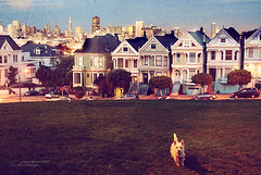 Painted Ladies, San Francisco. (ShanLuPhoto) Tags: sanfrancisco california dog america lawn victoria bluehour paintedladies alamosquare   loolooimage