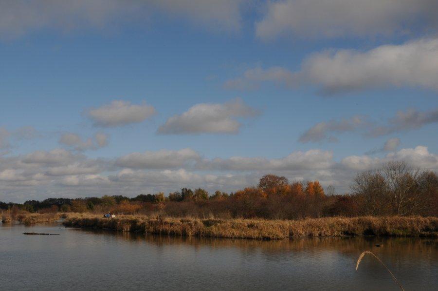 走过那片芦苇坡-- Red crowned Crane - 微娃 - 微娃