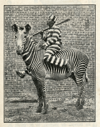 1932_jail jockey zebra stripes_sRGB_400