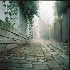 Pathways leading nowhere (Brendan_Timmons) Tags: green 120 6x6 tlr film leaves fog stone mediumformat cobble lane yashicamat yashinon 80mmf35 kodakektacolorpro160