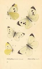 papillons d 12