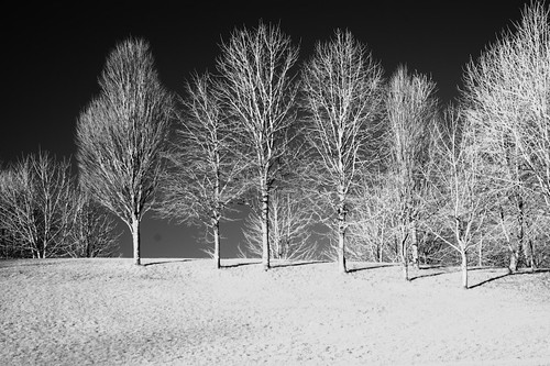 Infra-Red Trees