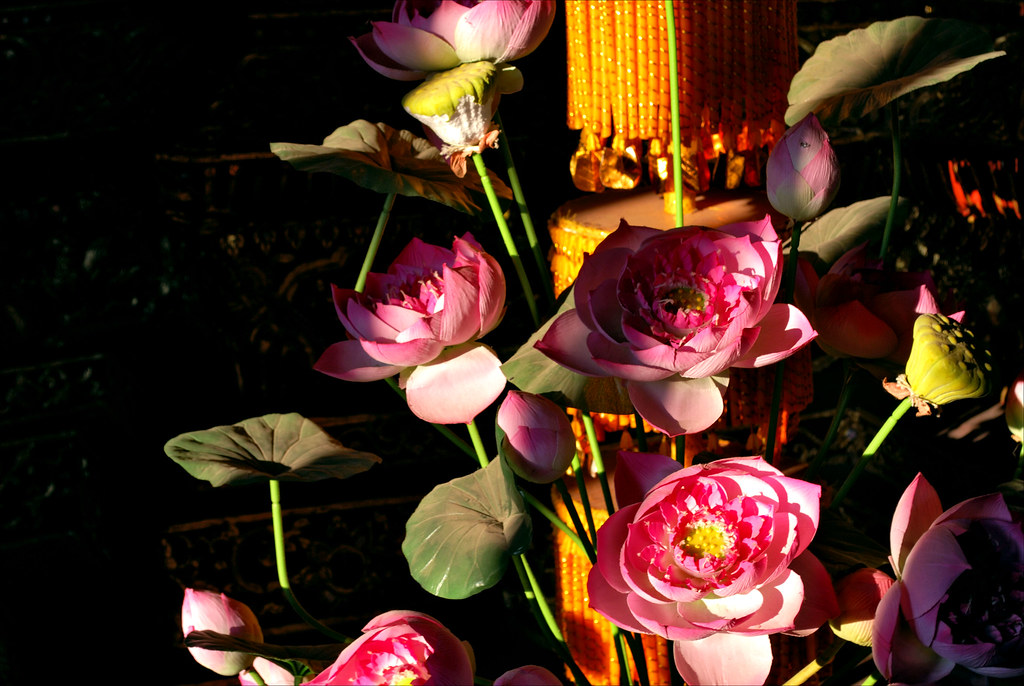 Wooden lotus flowers and shadows