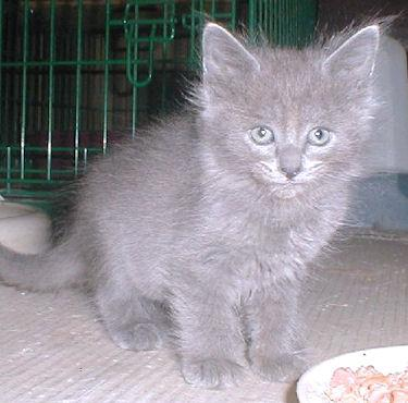 We have kittens 3265806067_f52cff71e0_o