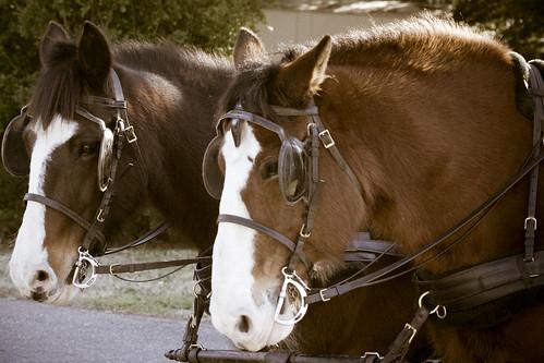 Horses @ Maymont