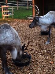 2008, 12, Décembre, Fête de Noel (30)