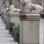 Avila: Leones de la Catedral