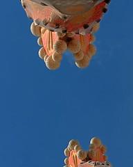 The Blue Sky Over The Sagrada Famlia (AndreasC) Tags: barcelona espaa spain catalonia gaud catalunya sagradafamilia barcellona spagna catalogna sagradafamlia espanya antonigaud cataloa mywinners d700 antoniplcidguillemgaudicornet aec614212121