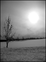 The last one... I promise! (-Sigrid-) Tags: winter bw sun snow cold tree sol norway norge blackwhite vinter tre sn noreg gjvik kaldt dragondaggerphoto dragondaggeraward