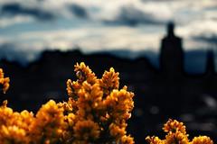 Edinburgh from Calton Hill (The Other Martin Tenbones) Tags: sky flower castle canon scotland edinburgh hill 100mm calton 100mmf28macro 5dmii