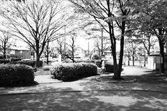 町田樹 画像54