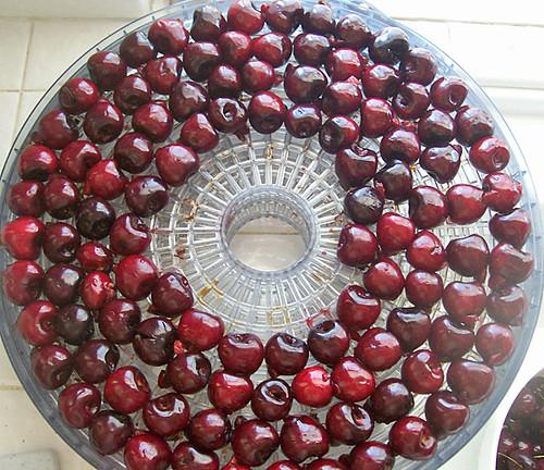drying cherries 3