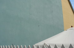 white paraspike (das-odg) Tags: white spiky weimar parasol spikes